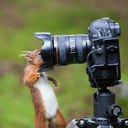 Милые животные картинки